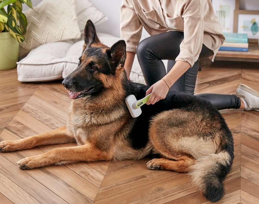 Microchip Ends Tedious Court Battle for Pet Custody