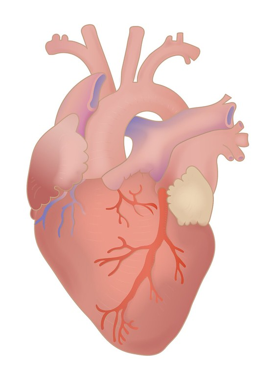 Study That Said COVID-19 Vaccine Causes Heart Inflammation Is Now Taken Down