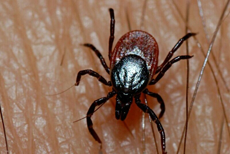 New Infectious Disease Discovered In Japan – It Is Called Yezo Virus And It's Not COVID-19