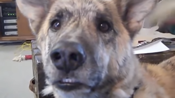 Video of Dog in Conversation with Owner is Breaking the Internet